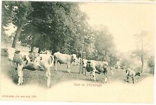 HERD of COWS on the Pasture Farming Vintage u/b PC c1910s