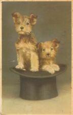 New ListingRare Vintage Dog Postcard 2 Border Terrier Puppies in Top Hat Belgium 1958