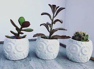 New Handmade Owl Cement planter pots