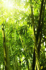 Bamboo Leaves-Wall Mural-6'wide by 9'high