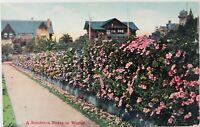 Vintage Santa Rosa California CA On the Road of a Thousand Wonders Postcard