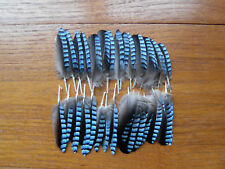 30 (EURASIAN)  BLUE JAY WING FEATHERS,FLY TYING ART&CRAFT JEWLELERY,HAIR,DESIGN,