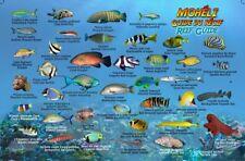 Comoros Dive and Fish ID Fish Card