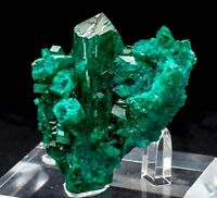 Big Green Dioptase Crystal - Mineral Specimen from the Congo