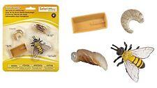 Safari Ltd Life Cycle of a Honey Bee 622716