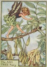 Flower Fairies: THE ASH TREE FAIRY Vintage Print c1930 by Cicely Mary Barker Art