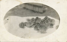 Group of Baby Chicks on Table RPPC ca. 1910 * Chickens Real Photo Post Card