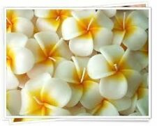 Relax Spa Shop Floating Candles ,Aromatherapy Relax Set of 10 Frangipani Candle