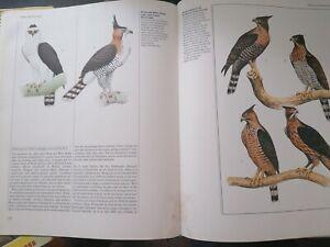 Birds Of Prey Book By Phillip Burton