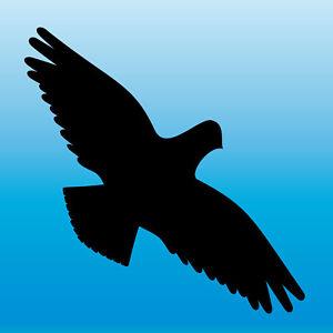 Warnvogel Aufkleber 20cm schwarz Habicht Vogel Schreck Fenster Schutz Deko Folie