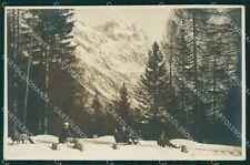 Belluno Cortina d'Ampezzo Slitte Foto cartolina VK0218