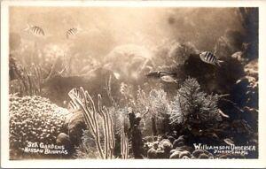 Vintage RPPC Postcard- Nassau Bahama Sea Gardens - Williamson Under Sea Photo