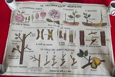 Ancienne Affiche scolaire MDI.Greffes Boutures Pollinisation Marcottage Bouture