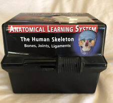 Anatomical Learning System Human Skeleton Bones Joints Ligaments 2001 Lau-Verlag