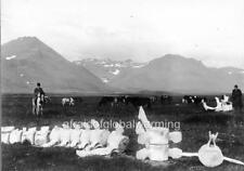 Photo. ca 1899. Iceland. Whale Bones - Snæfellsnes, by Búðir