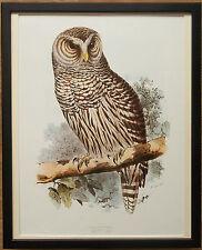 Prohibido por Edward Lear, Búho - 20''x16'' Marco, con dibujo de búho Pared Arte