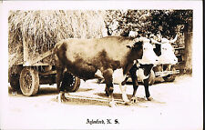 RPPC Real Photo Postcard Aylesford  NOVA SCOTIA ~ Ox Drawn Wagon Loaded With Hay