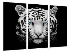 Cuadro Moderno Fotografico Tigre blanco, Animales, 97 x 62 cm ref. 26309