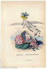 LES FLEURS ANIMÈES-Lithogrphie 1852 Blumen-Mädchen-Hortensia-Hortensie