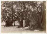 Algérie, Arbres  Vintage albumen print.  Tirage albuminé  20x25  Circa 188