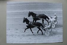 Sport XXL Foto Pferd Traber 1970-80er Trabrennen Sulky Pferde Rennbahn +++