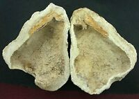 Pair Of Two Coral Fossil Fossilized Prehistoric  Slice Specimen Gem Gemstone #1