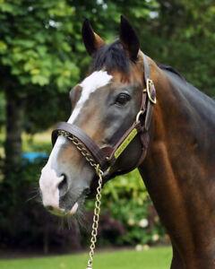 SADLERS WELLS 02 RIDDEN BY PAT EDDERY (HORSE RACING) PHOTO PRINTS-KEYRINGS-MUGS