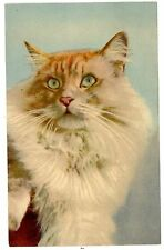 Artistic -LONG HAIRED KITTEN-Stehli Postcard White/Orange/Cat