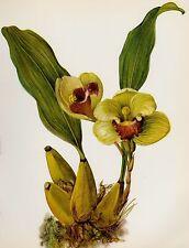 Botanical ORCHID Print Vintage Flower Print Gallery Wall Art Cottage Decor 1925
