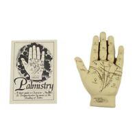 Palmistry Hand Kit w/Palm Reading Guide Booklet Beginner Fortune Telling Gift