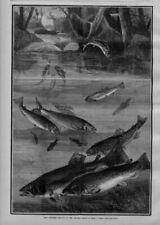 Woodcut/Block Fishing Original Art Prints