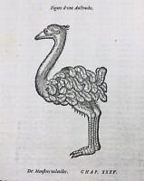 Rare Gravure Autruche 1595 Baleine à Flessingue Vilissingen Retz Ornithologie