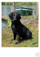 Flatcoated Retriever Mousemat Design No. 2 by Starprint