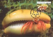 Complete Set 4 maxicards Portugal 2010 Marine Life Оcean floor Fauna Flora