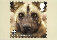 ROYAL MAIL STAMP POSTCARD-WWF:SAFEGUARDING THE NATURAL WORLD-AFRICAN WILD DOG~~