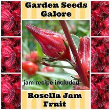 Rosella Early Jam Fruit 20 seeds vegetable seeds Jam Tree