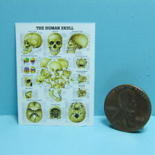Dollhouse Miniature Replica Science Medical Chart of the Human Skull L4201