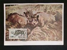 CSSR MK 1957 FAUNA WILDSCHWEINE WILD BOAR MAXIMUMKARTE MAXIMUM CARD MC CM c7890