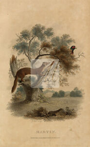 ANTIQUE Rural Sports Hand Coloured Engraving of a Margin and Pheasant #F237