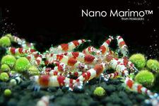 Nano Marimo Ball x5 -Live Plant for  Chiller Aquarium