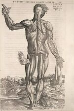 de humani corporis fabrica ANATOMY POSTER 1543 scientific historic 24X36