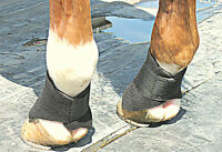 Scalping Boots-Comfortably Protect coronet band, ankle, No rub, Easy on off