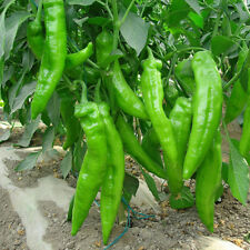 200 pcs Giant Horn pepper Seeds Delicious vegetables