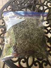 Spanish Moss Live Florida Oak Tree Fresh decorative floral craft Air Plant dry