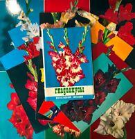 1974 Gladiolus Flowers Russian Selection Lot 18 pcs Postcards Set Vintage
