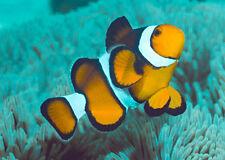 Clown Fish - 3D Lenticular Postcard Greeting Card - Marine Life