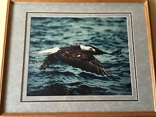 Millcreek Wildlife Reflections Eagle Photo, Hand Signed, Framed, 19 3/4' x 16""