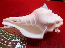 UTRAVARTI SHANKH SOUND MAKING PUJA CONCH SHELL SHANKHA INDIA