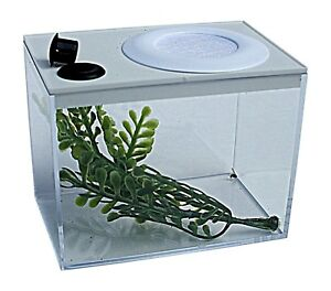 Jumping Spider Mini Vivarium, Insect Box With Feeding Access