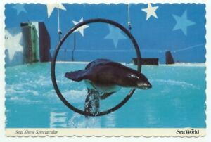 Sea World Seal Show Spectacular Postcard